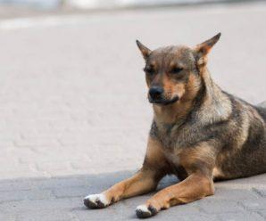 Безпритульні собаки,які були виловлені і взяті на стерилізацію.