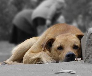 """Для зменшення кількості безпритульних тварин у місті Івано-Франківську, КП """"Полігон ТПВ"""" за березень місяць простерелізувало 56 бродячих собак."""