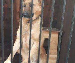 Собаки,які знаходяться в пункті перетримки безпритульних тварин, чекають на своїх господарів!