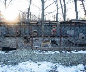Безпритульні собаки шукають своїх господарів!
