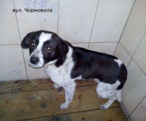 Виловлено і простерелізовано безпритульних собак за період 22.01-31.01.2020 року.