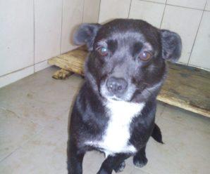 Виловлено і простерелізовано безпритульних собак 03.03-04-.03.2020 року