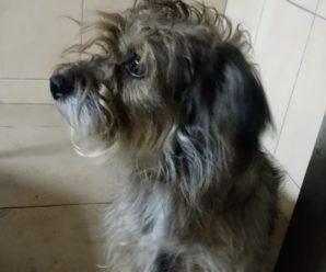 Безпритульні собаки,які були взяті на стерилізацію.