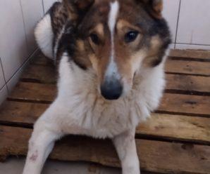 Безпритульні собаки,які були виловлені і взяті на стерилізацію