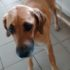 Безпритульні собаки, які були виловлені і взяті на стерилізацію