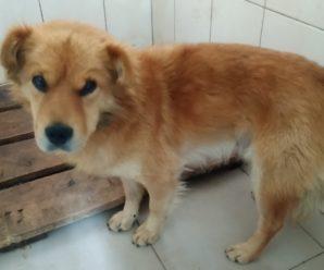 Безпритульні собаки, які були виловлені і взяті на стерилізацію.